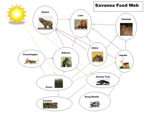 food web creator food chain food web the tropical grasslands savannas biome