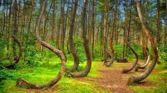 the most unique crooked forest in poland traveler corner
