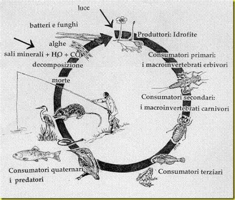 catena alimentare uomo la catena alimentare