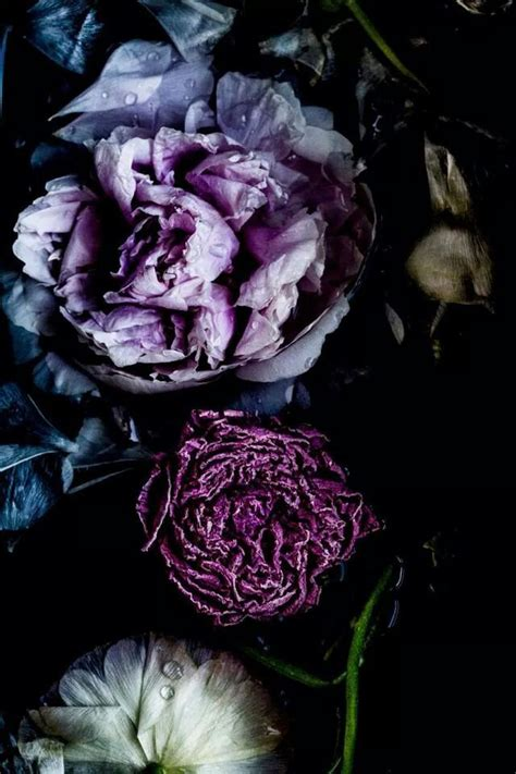 purple flower wallpaper uk pin by alejandro hm on nature pinterest flowers