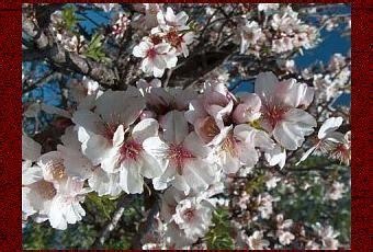 fiori di bach per lutto fiori di bach per il lutto paperblog