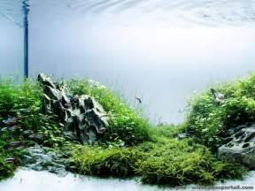 Takashi Amano Aquascape L Aquascaping D 233 Finition Et Explications Illustr 233 Es