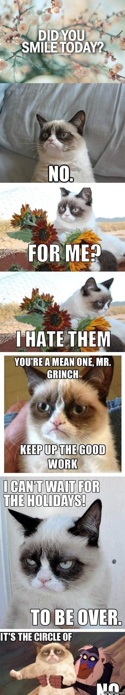 Best Of Grumpy Cat Meme - meme best of grumpy cat