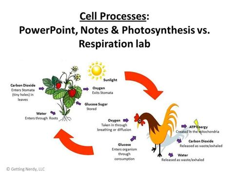 design lab on photosynthesis students learn about the relationship between