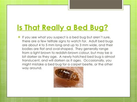 truth  bed bugs