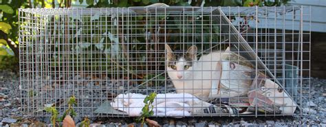 stray cat trap operation cat animal rescue fund of the htons