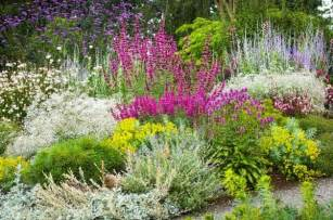 heat tolerant crops best 25 drought tolerant shrubs ideas on pinterest