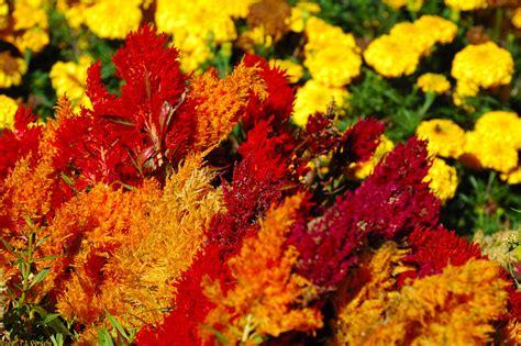 harvest colors rossorry parish church 187 harvest flowers colour