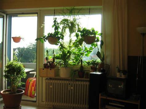 wohnung pflanzen wohnzimmer f 252 nf in einem f 252 nf in einem zimmerschau