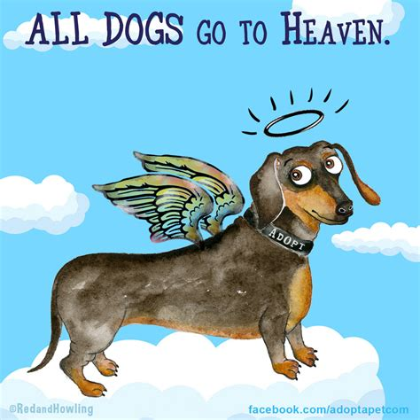 do dogs go to heaven new all dogs go to heaven 187 adopt a pet