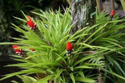 imagenes de animales y plantas de brasil paisajismo pueblos y jardines los cerros de escaz 218 su