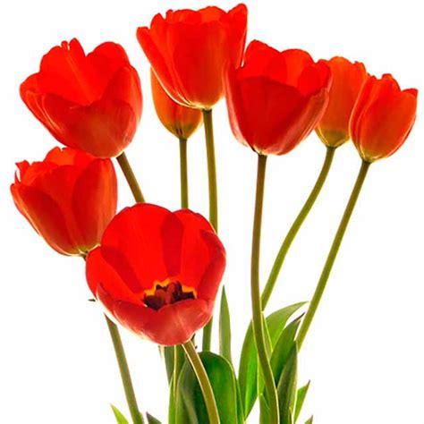 imagenes de un flores flores bonitas fotos im 225 genes de flores hermosas