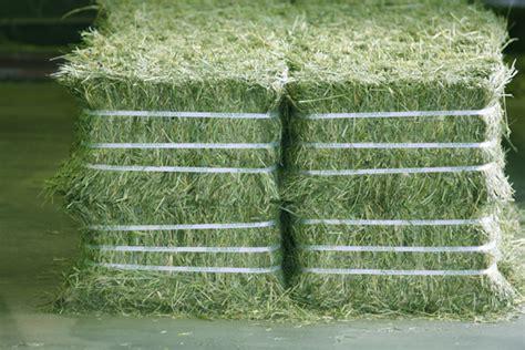 Harga Hay Pakan Kelinci murah alfalfa alfafa hay untuk hewan bahan pakan hay