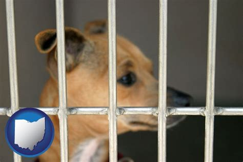 tuscarawas county pound animal shelters in ohio