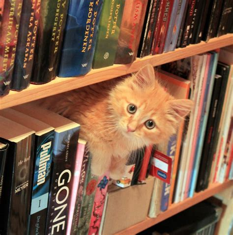 cats and books saturdays the south literary cats free for all