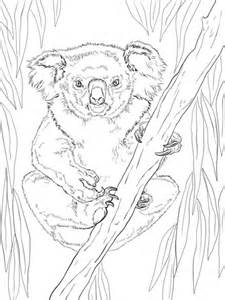 Friendly Female Koala coloring page | SuperColoring.com