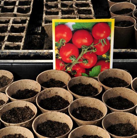 mutterbänder ziehen ab wann tomatenpflanzen selbst ziehen das gartenmagazin