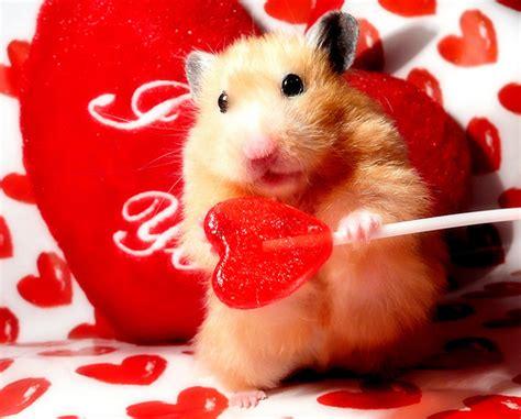 happy valentines day animals s day fuzzy today