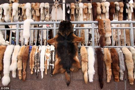 Jolies St Photo Shoot Hanging With The Animals by Wolf And Fox Fur Sold By A Vendor In China In