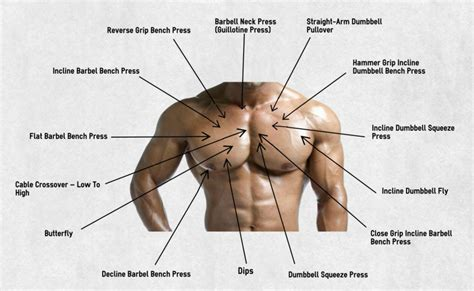 the best chest exercises for beginners plus workout be