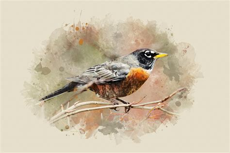 american robin watercolor art mixed media by christina rollo