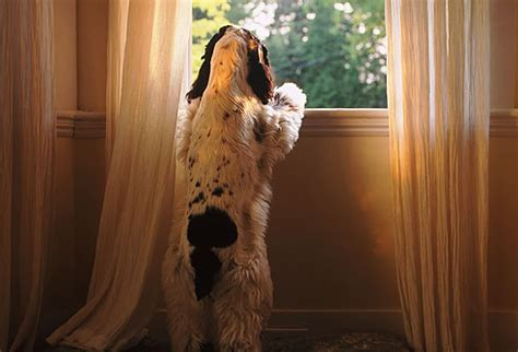 dogs separation anxiety dealing with separation anxiety listener