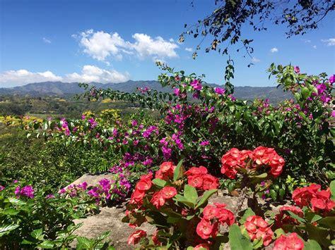 free photo landscape flowers sky mountains free