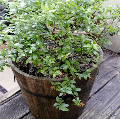 soil for container gardening when to add perlite soil to container gardens