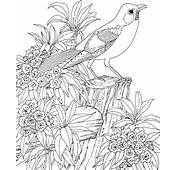 Coloring Pages For Adults Printable Adult