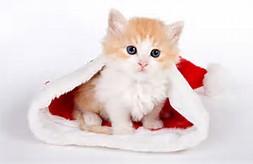 Cute Christmas Cats