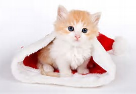 Cute Christmas Cats