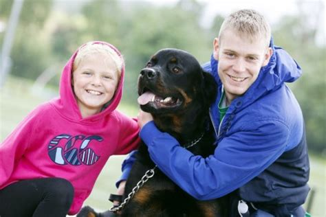 rottweiler cuddle gallery dogs on show at the of the lake the fermanagh herald