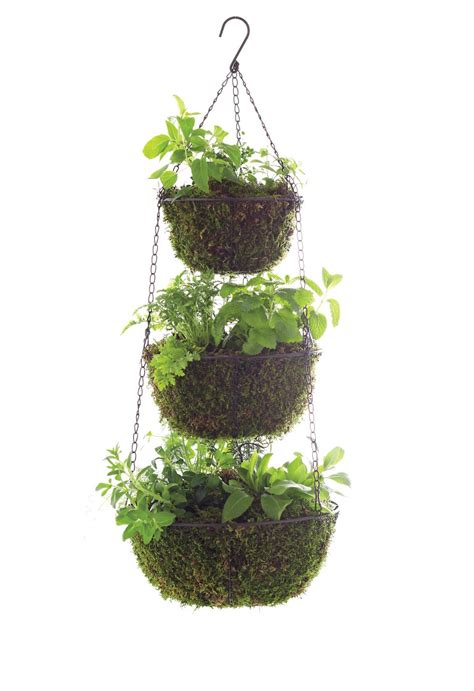 hanging herb planter three tier hanging herb planter garden therapy