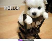 Cute Hello