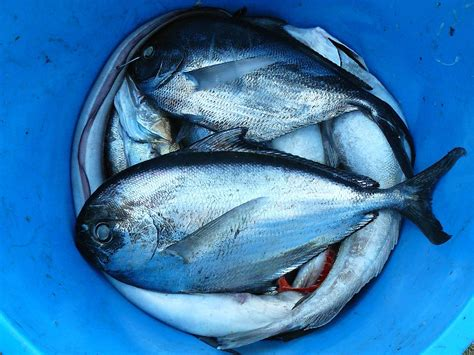 fish pescado best fish to eat and those to avoid healthifyme blog