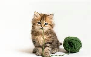 <strong>kitten</strong>-wool-ball.jpg