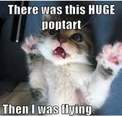 Funny Pictures Photos Cats Caturday Cat ITS