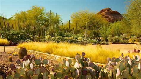 botanical gardens arizona desert botanical garden in arizona expedia ca