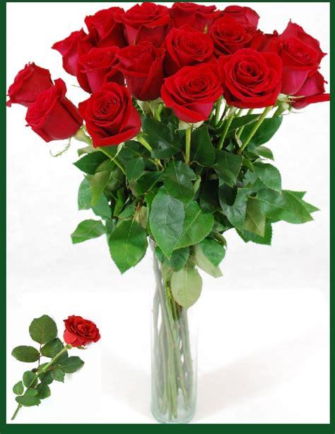 imagenes rosas grandes fotos de ramos de rosas rojas y blancas imagen de rosas