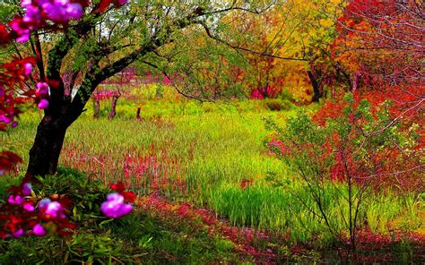 imagenes de paisajes naturales otoño paisajes hermosos taringa