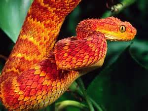 colorful snake 1000 ideas about colorful snakes on beautiful