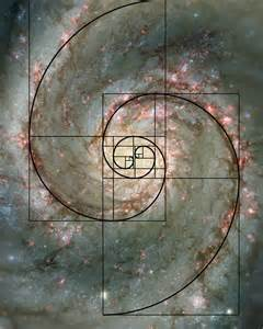 Image result for fibonacci spiral