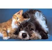 Dog And Cat Wallpaper Teddybear64 16834783 1280 800