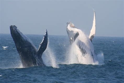 st lucia tours  charters whale watching  richards