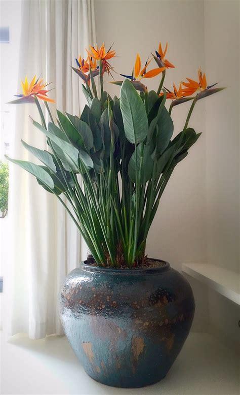 Ceramic Plant Holders Ceramic Plant Holders