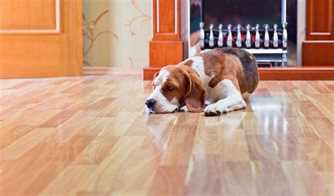 Best Flooring For Pets Best Flooring For Dogs 7 Types For Health And Safety Based On Science