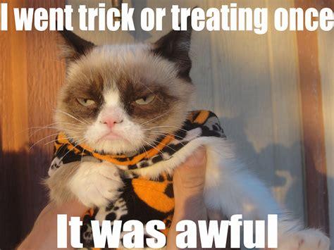 cat and memes memes contexts