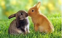 Cute Bunnies Animals