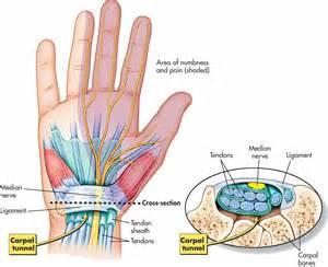 Anatomy wrist carpal tunnel
