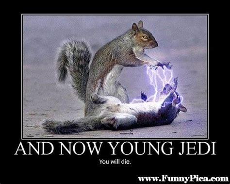 Funny Squirrel Memes - funny squirrels funny squirrel picture 13 funnypica com